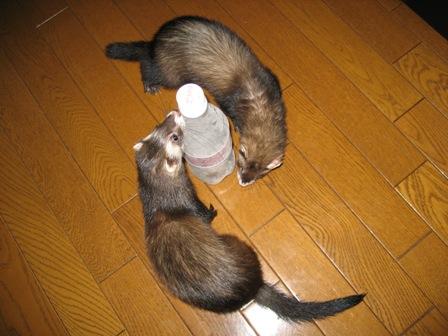 ペットボトルのまわりをグルグル