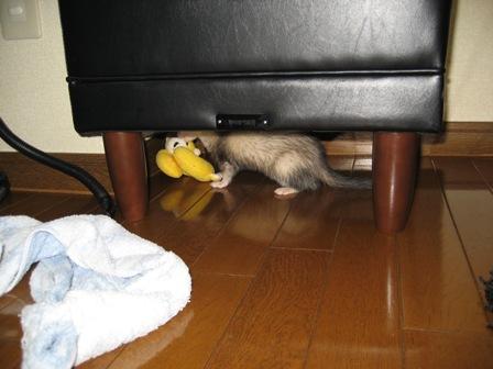 オットマンの下で獲物発見